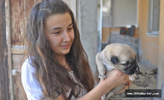 Mezarlıkta Bulduğu Yavru Köpeği Sahiplendi