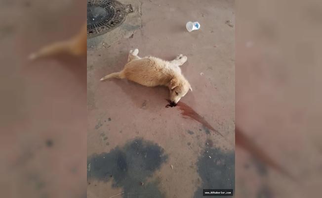 Sokak Köpeği Acımazsızca Öldürüldü