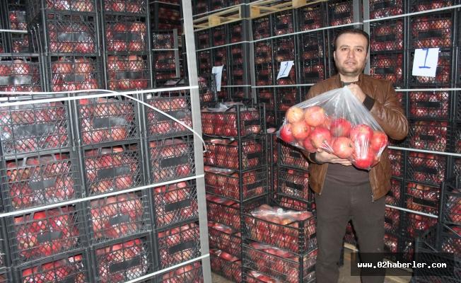 Samsat'ta kış ortası nar ihraç ediliyor