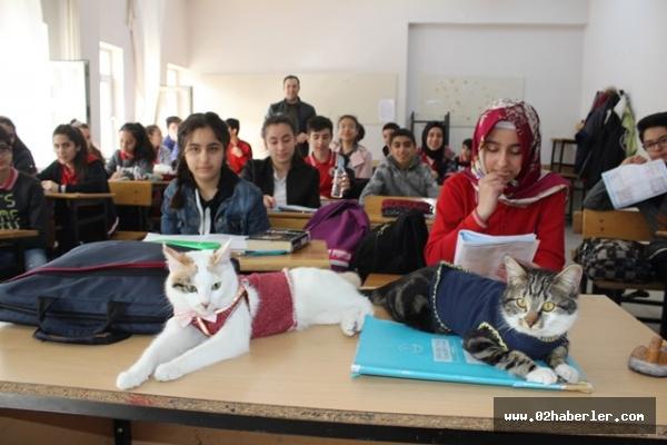 Bu kediler derse giriyor