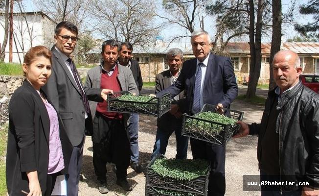 Tut'da domates fidesi ve hıyar tohumu dağıtıldı