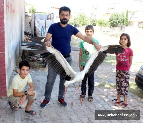 Mahalleli ayağı kopan leyleğin yardımına koştu