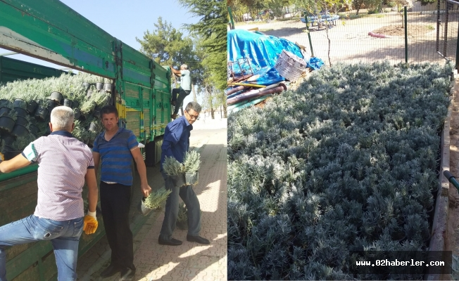 Besni'de 5 Bin Adet Lavanta Fidanı Toprakla Buluşacak