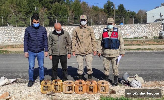 Avcıları Yakalandı, Keklikler Doğaya Bırakıldı