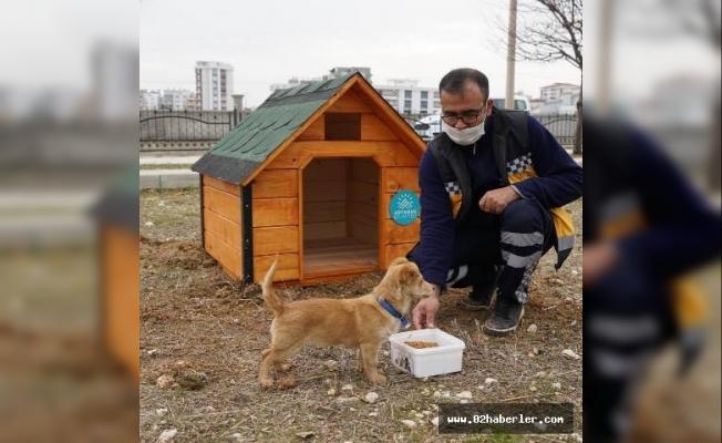 Parklara Kedi ve Köpek Evleri Yapılıyor