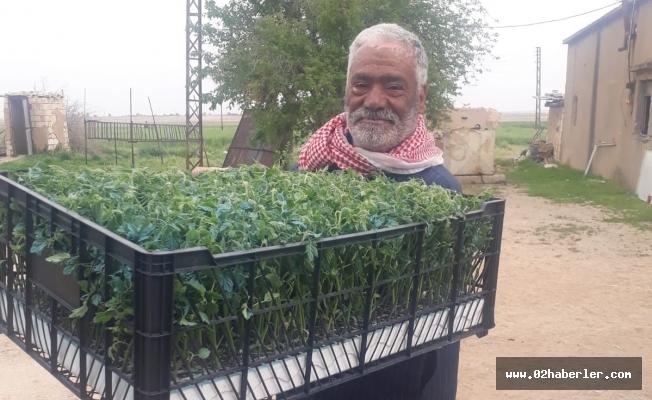 Barış Pınarında Tarımsal Çeşitlilik Destekleniyor
