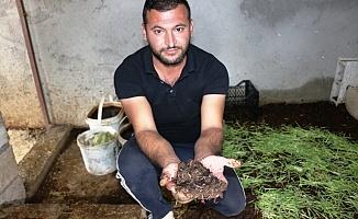 Köylülerin Dalga Geçtiği Solucan İşinde Aylık 2 Ton Gübre Üretiyor