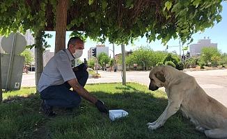 Sokak Hayvanları için 200 noktaya mama bırakıldı