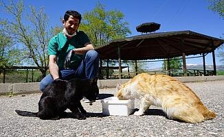 Sokak Hayvanlarına Yönelik Çalışmaları Takdir Görüyor