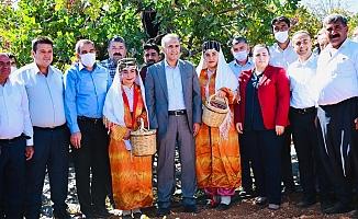 Besni'de Davullu Zurnalı Fıstık Hasadı