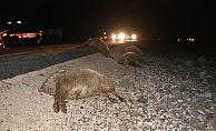 Otomobil koyun sürüsüne daldı: 40 koyun telef oldu