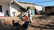 O Köy, Kuduz Karantinasına Alındı